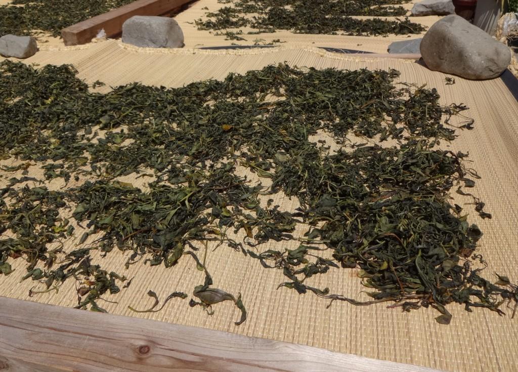 山茶釜炒り茶